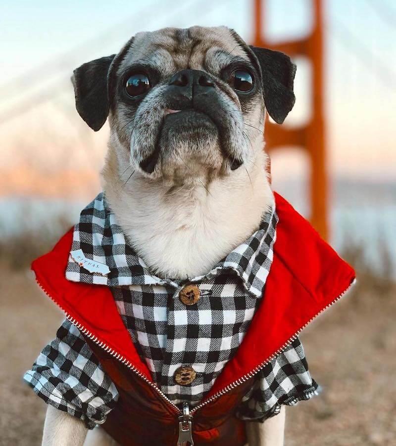 dog-threads-shark-tank-dog-clothes-5
